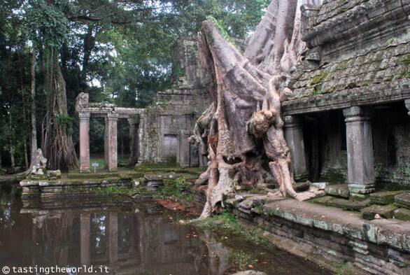 Preah Khan, Angkor (Cambogia)