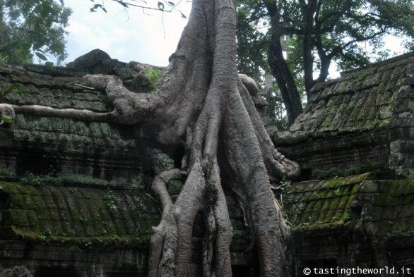Ta Prohm, Angkor (Cambogia)