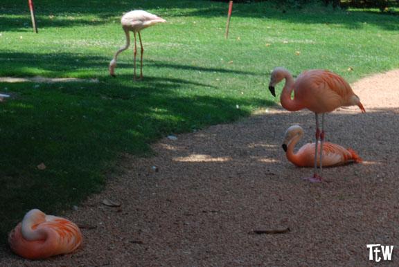 I fenicotteri rosa a Milano di villa Invernizzi