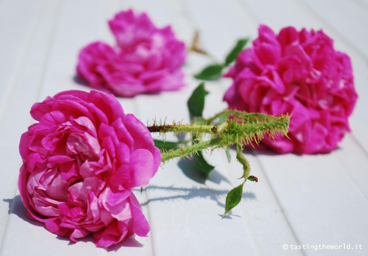 Rose da sciroppo - Valle Scrivia