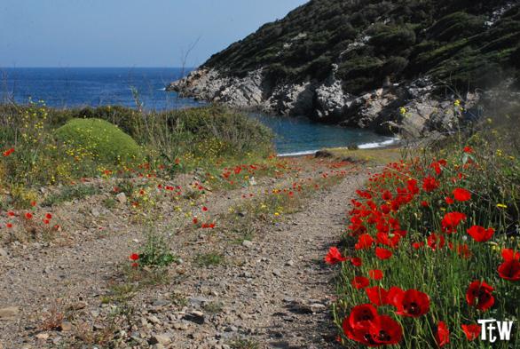 Spiagge di Alonissos