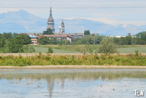 Novara: cupola di San Gaudenzio e risaie