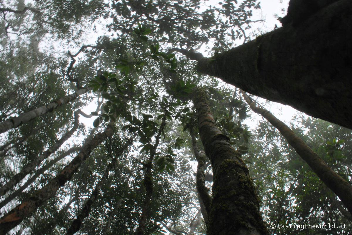 Ko Phangan, Khao Ra