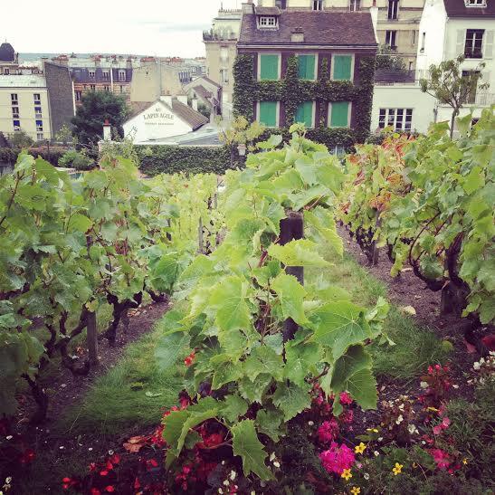Clos Montmartre, la vigna di Montmartre (Parigi)