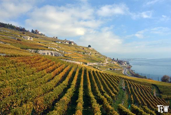 Lavaux, Svizzera