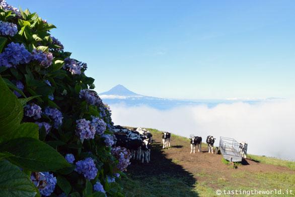 Sulla via del Pico da Esperança, São Jorge, Azzorre
