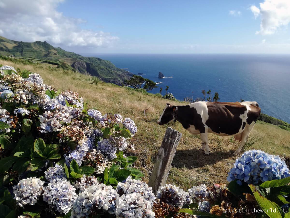 Azzorre, cosa vedere e fare, quale isola scegliere