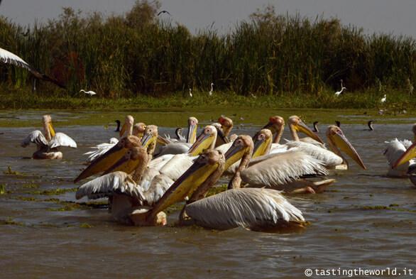 Santuario nazionale degli uccelli di Djoudj, Senegal