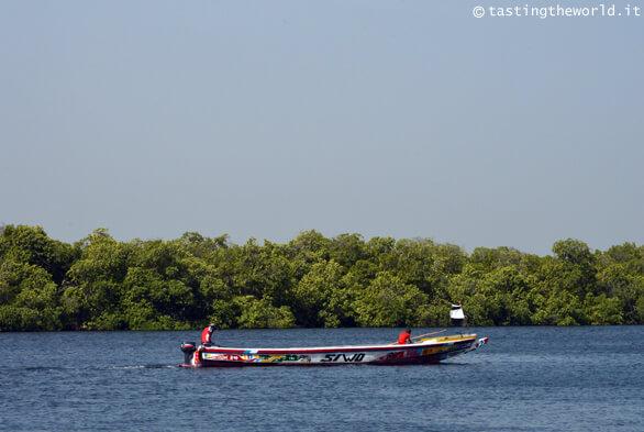 Delta del fiume Saloum, Senegal