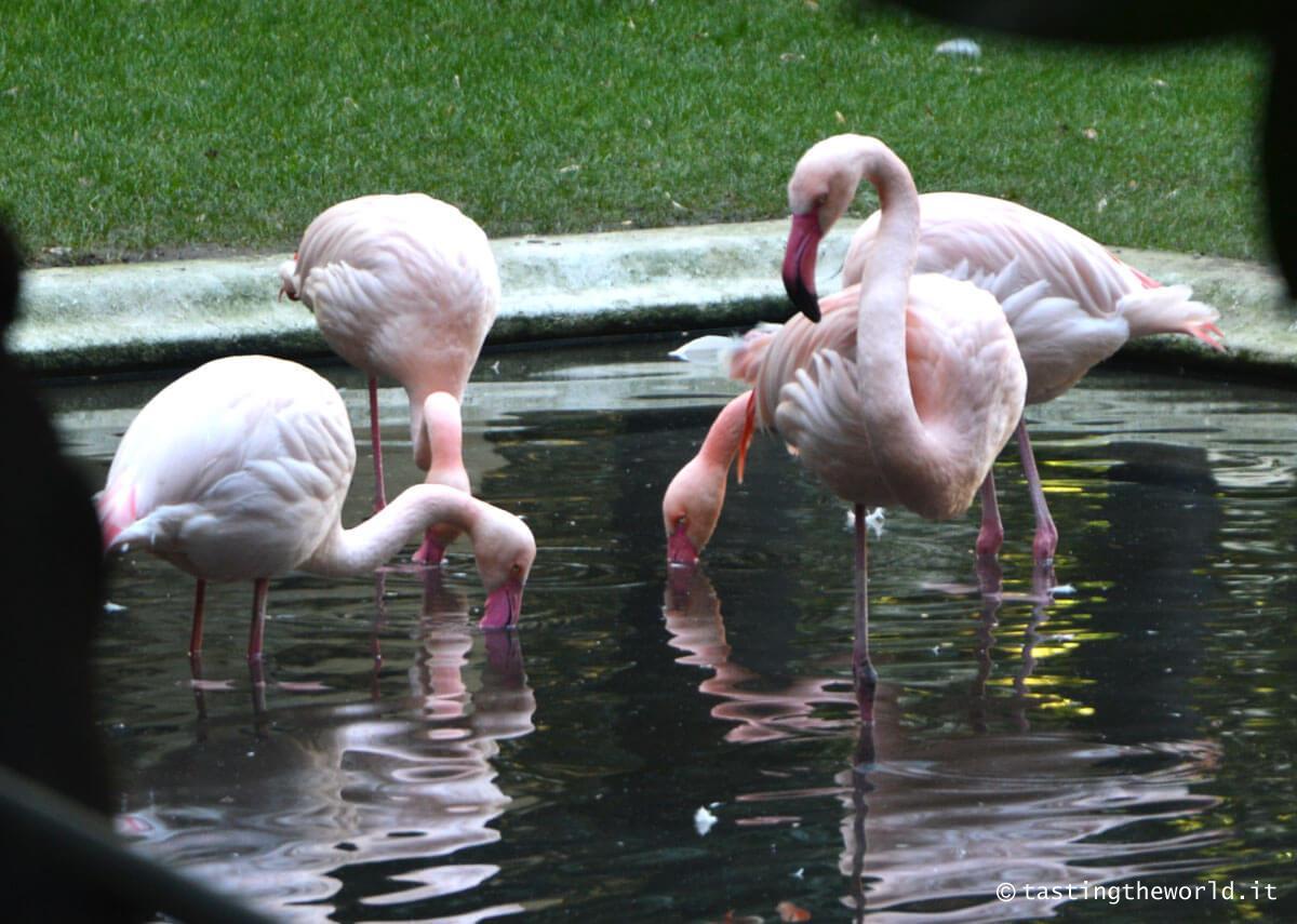 Fenicotteri rosa a Milano, Villa Invernizzi