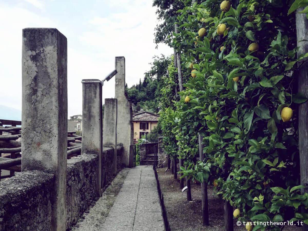 Limonaia del Castel, Limone sul Garda