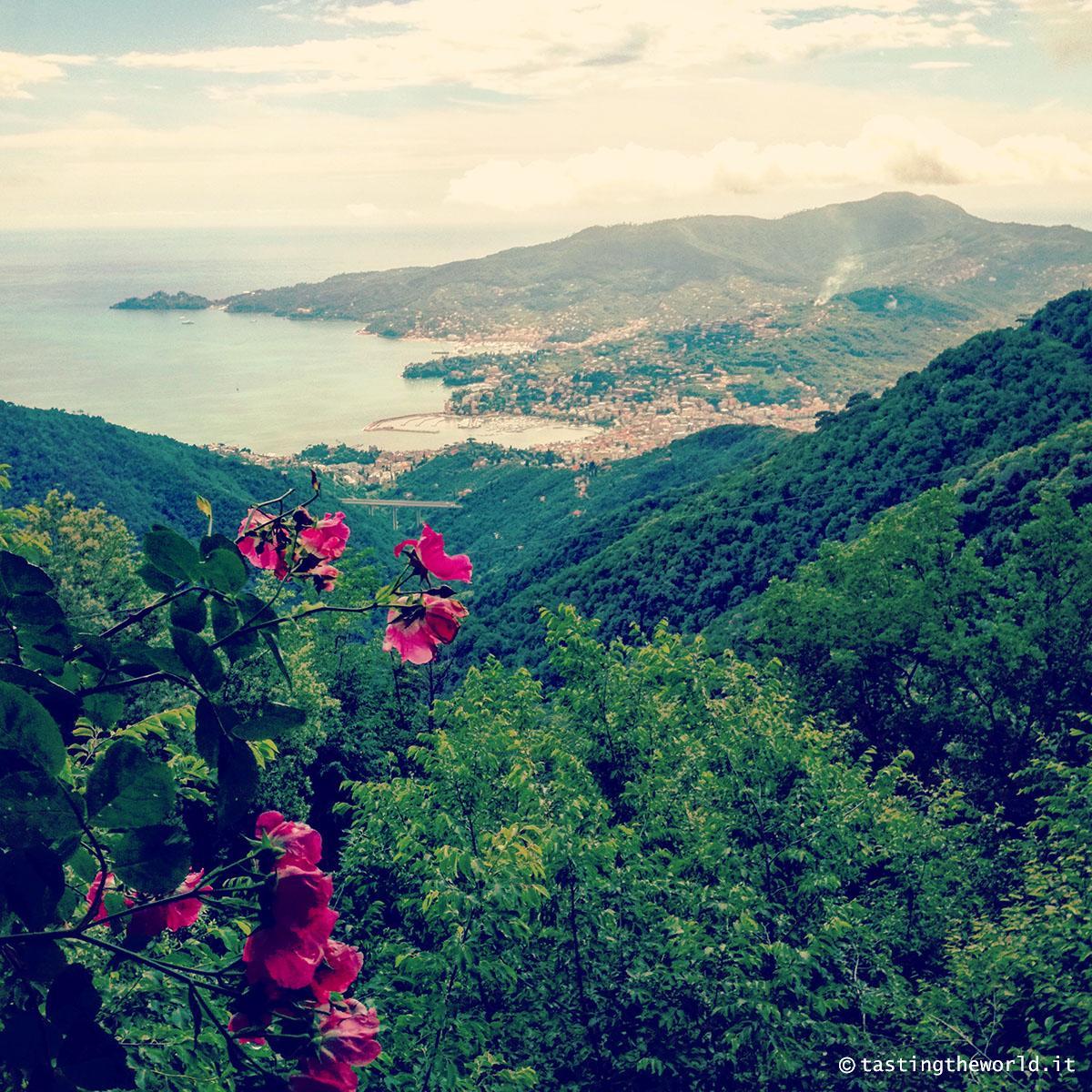 Vista su Rapallo, Santa Margherita Ligure e il monte di Portofino da Montallegro