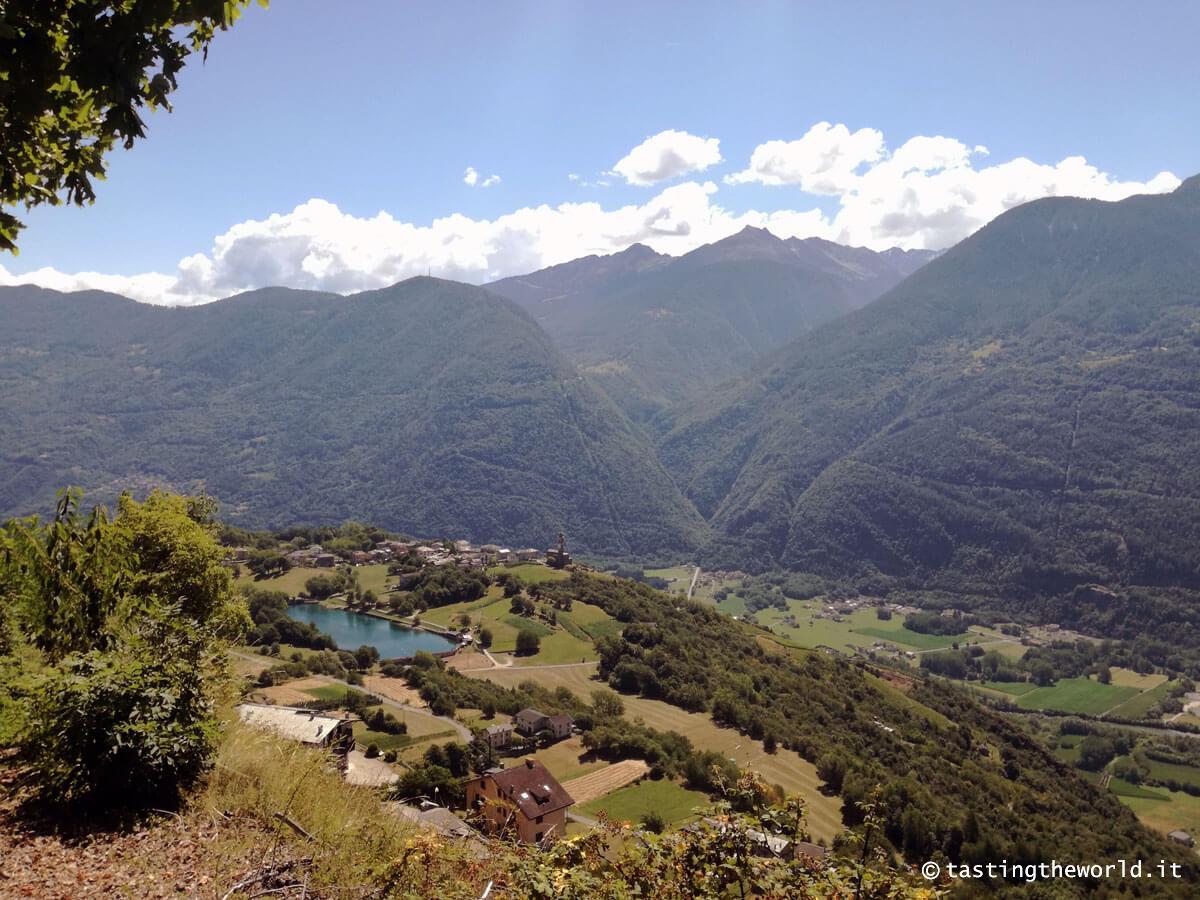 Vista sulla valle dalla pineta di Teglio