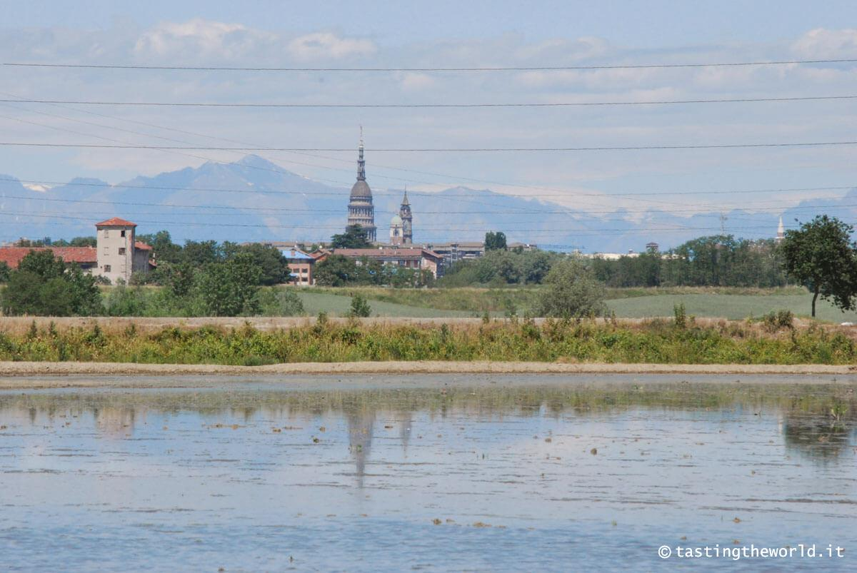 La cupola di San Gaudenzio (Novara) dalle risaie
