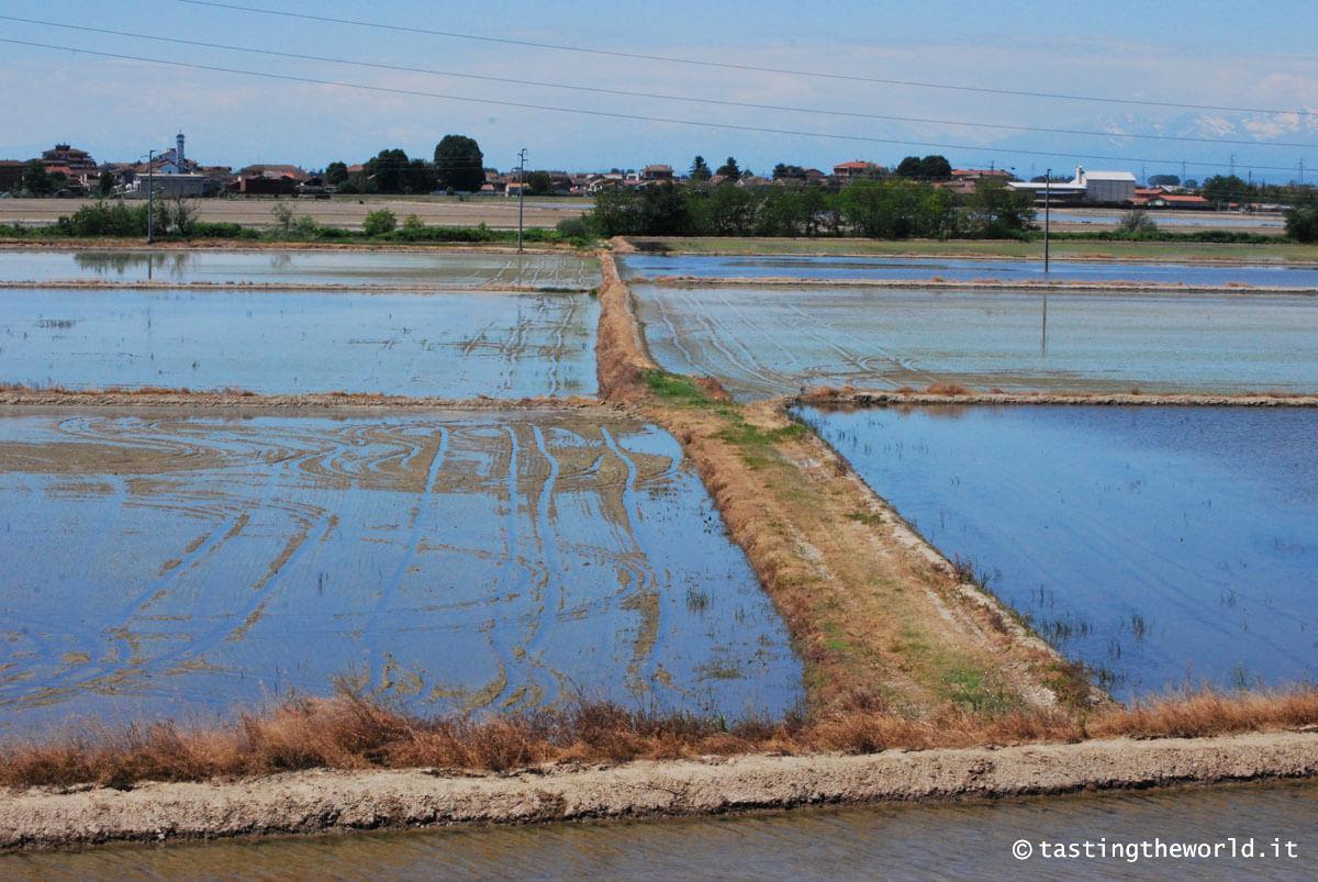 Da Novara a Vercelli in bicicletta: un itinerario tra le risaie